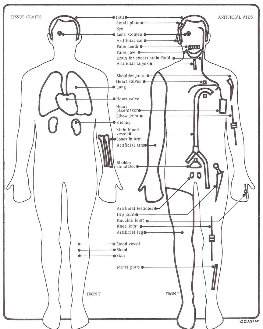 Diagram replaceable man replaceable man appears after reference man 1 3 which diagram the skeletal muscular lymphatic blood and internal organ systems the schematic ccuart Image collections